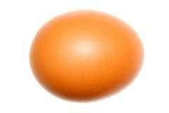 Huevo del pollo Fotos de archivo