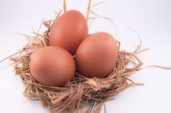 Huevo del pollo Imagen de archivo