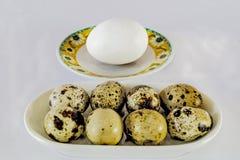 Huevo del pollo contra las codornices Fotos de archivo libres de regalías