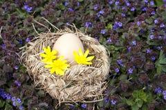 Huevo del pollo en la jerarquía del pájaro Foto de archivo