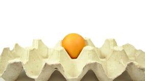 Huevo del pollo en una bandeja Imagen de archivo libre de regalías