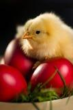 Huevo e hierba rojos del pollo de Pascua Fotos de archivo