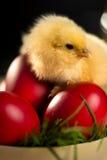 Huevo e hierba rojos del pollo de Pascua Imagen de archivo