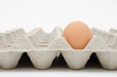 Huevo en bandeja Imágenes de archivo libres de regalías