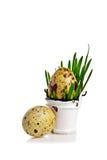 Huevo en cubo Fotografía de archivo libre de regalías