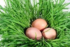 Huevo en hierba Imagen de archivo libre de regalías