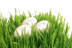 Huevo en hierba Fotos de archivo libres de regalías