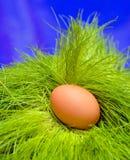 Huevo en hierba Foto de archivo libre de regalías