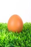 Huevo en hierba Fotografía de archivo