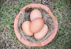 Huevo en hierba Imagen de archivo