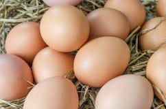 Huevo en jerarquía del heno fotografía de archivo