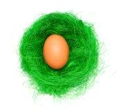 Huevo en la jerarquía verde Fotografía de archivo libre de regalías