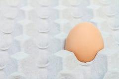 Huevo en un paquete del cartón Imagen de archivo