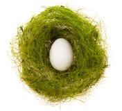 Huevo en una jerarquía verde Imagenes de archivo