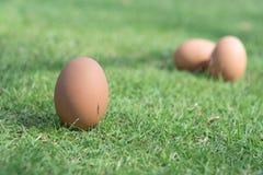 Huevo fresco en una hierba verde Fotografía de archivo libre de regalías