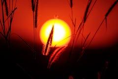 Huevo frito de la puesta del sol Imagenes de archivo