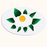 Huevo frito en la placa blanca con la hoja de la albahaca Fotografía de archivo libre de regalías