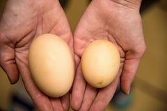 Huevo hecho en casa del pollo con dos yemas de huevo 2018 Fotografía de archivo libre de regalías