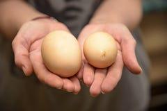 Huevo hecho en casa del pollo con dos yemas de huevo 2018 Imagen de archivo libre de regalías