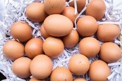 Huevo, huevo del pollo foto de archivo