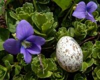 Huevo intacto del pájaro Imagenes de archivo
