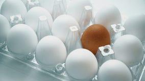 Huevo marrón solo en caja así como las blancas Concepto de la diferencia, individualidad almacen de video