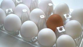 Huevo marrón solo en caja así como las blancas Concepto de la diferencia, individualidad metrajes