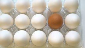 Huevo marrón solo en caja así como las blancas Concepto de la diferencia, individualidad almacen de metraje de vídeo