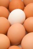 Huevo único Imagen de archivo libre de regalías