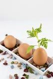 Huevo y planta fotos de archivo libres de regalías