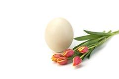 Huevo y tulipanes de Pascua fotografía de archivo