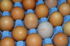 Huevos imágenes de archivo libres de regalías