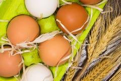Huevos amarillos y blancos en una caja, una pluma del pollo y un trigo Imagen de archivo libre de regalías