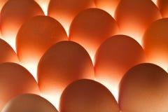 Huevos - bajo encendido Foto de archivo libre de regalías