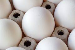 Huevos blancos del pollo en primer de la bandeja de la cartulina Fotografía de archivo libre de regalías