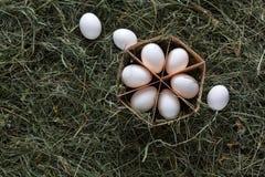 Huevos blancos del pollo fresco en cartón en fondo de madera rústico Imagenes de archivo