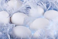 Huevos blancos en las plumas azules suaves, apacibles Imagenes de archivo