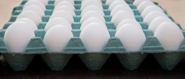 Huevos blancos en un cartón verde Imágenes de archivo libres de regalías