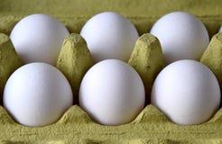 Huevos blancos frescos en una jerarquía foto de archivo