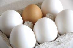 Huevos blancos y marrón Imagen de archivo