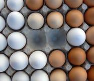 Huevos blancos y marrones Imágenes de archivo libres de regalías