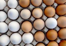 Huevos blancos y marrones Imagen de archivo libre de regalías