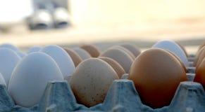 Huevos blancos y marrones Fotos de archivo libres de regalías