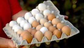 Huevos blancos y marrones del control de la mujer Foto de archivo libre de regalías