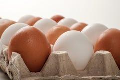 Huevos blancos y marrones del pollo Fotografía de archivo