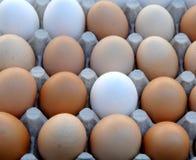 Huevos blancos y marrones en fila Imagenes de archivo