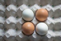 Huevos blancos y marrones en un cartón Imagenes de archivo