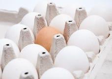 9 huevos blancos y un marrones Fotos de archivo