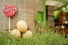 Huevos con el caramelo en una hierba verde Imágenes de archivo libres de regalías