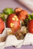 Huevos con el modelo natural foto de archivo